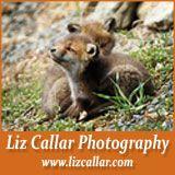Liz Callar Foxhunting Photography  Site