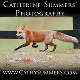 Cathy Summers Fox and Foxhunting Photography