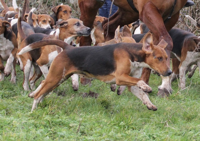co limerick.foxhounds.power