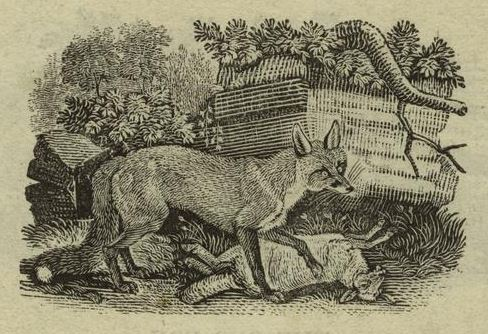 greyhound fox.nypl