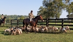 Huntsman Dennis Downing and Hounds