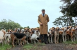 Woodland Pytchley Hounds