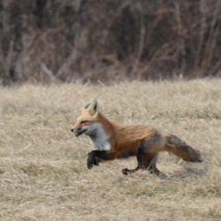 Liz Callar Fox Photos
