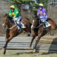 Article images - Warrenton Point to Point 2011