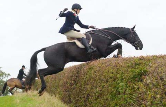hedge jumping2