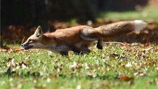 fox.lge.lees