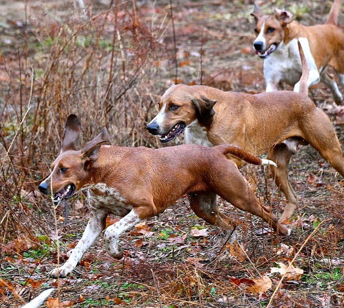 3hounds.lees