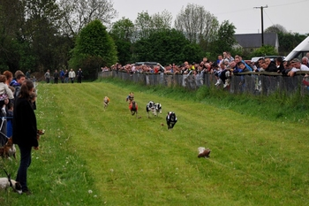 Flapper_race_with_hounds_following_a_lure
