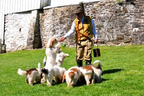James Scharnberg master with his Skycastle Griffon Vendeen French Bassets in Chester County PA