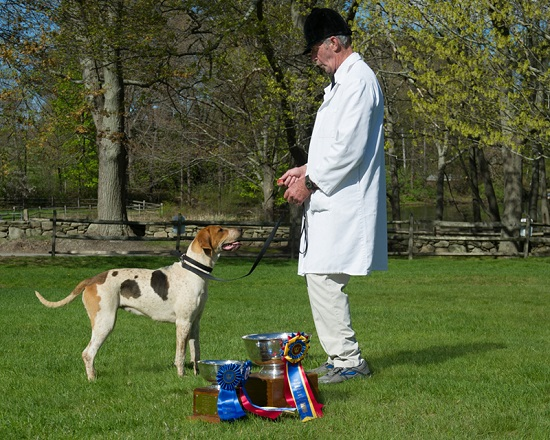 Myopia-hunt-Lupy-shawn tinkham-foxhound-show-grand-champion