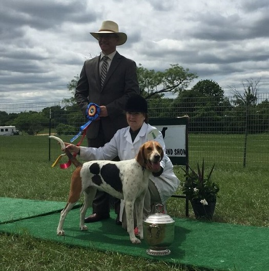 Grand-Champion-foxhound-Brazos-Valley-Sandy-Dixon-MFH-John-Tabachka-huntsman-Sewickley-Hunt