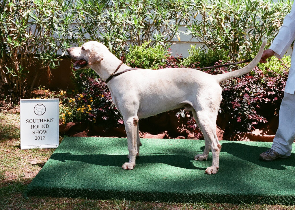 Southern Hound Show