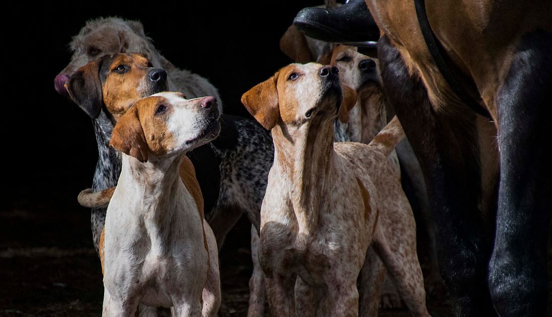 western hounds uk.janet ladner