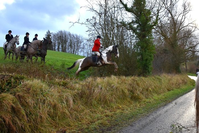 STF.Stephen Hutchinson MFH in a brave jump onto the road fox hunting with the South Tyrone Foxhounds