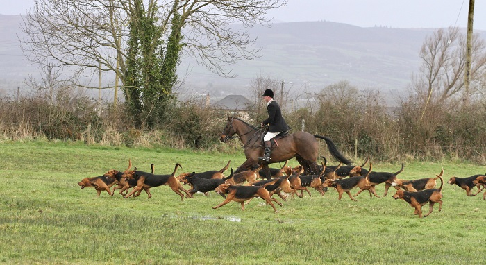 scarteen20.huntsman and hounds