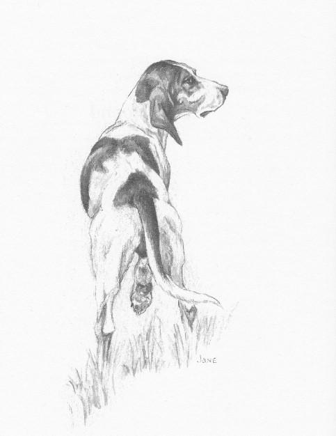 lost hound.Jane Gaston