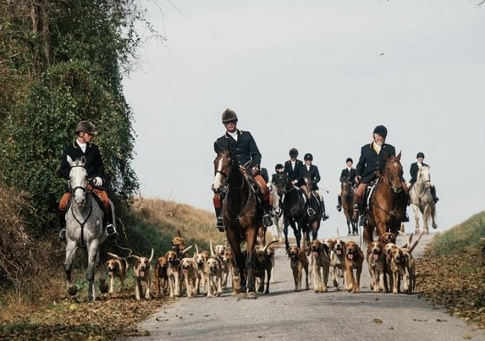 rosetree bm staff and hounds
