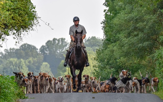 ashley hubbard.will hunt fox hounds at green spring valley