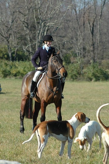 ddl fox hunting